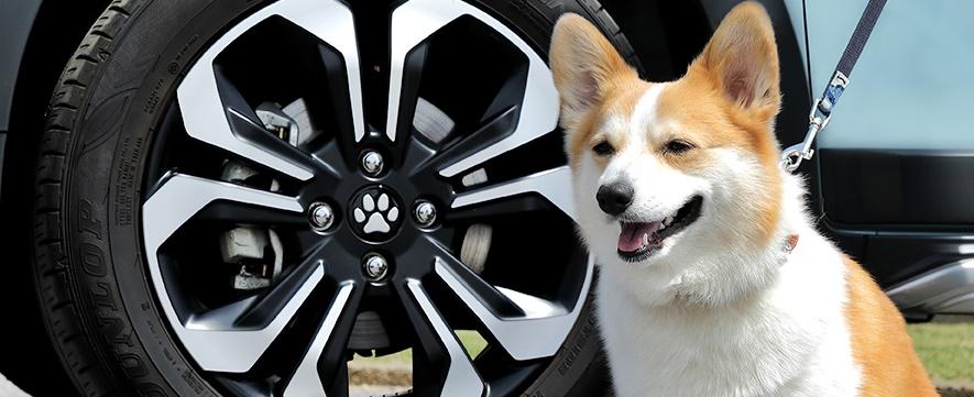 Honda Dog acessories